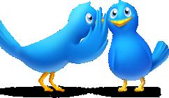 twitter_gossip_birds