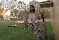 Foto zu Promotion-Aktion: die Anti-Stress-Kätzchen-Therapie
