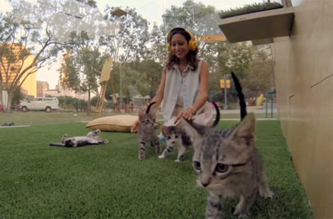 Artikelbild für: Promotion-Aktion: die Anti-Stress-Kätzchen-Therapie