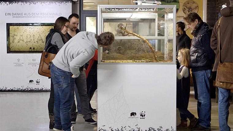Artikelbild für: Ameisen-Demo & -Dankeskarten: zwei Promotion-Aktionen des WWF und Kölner Zoos