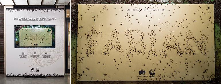 koelner-zoo-wwf-ameisen-dankeskarten-bbdo
