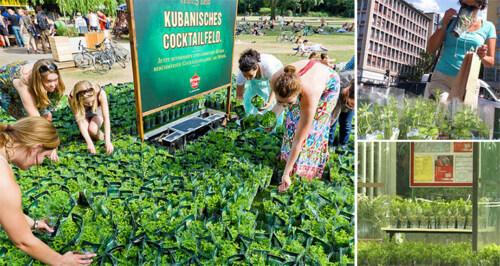 Artikelbild für: Promotion: Mojito-Minze-Felder in deutschen Städten