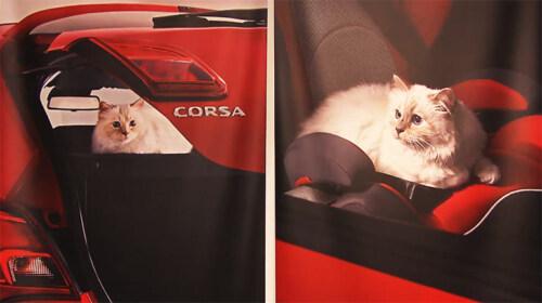 """Artikelbild für: """"Corsa Karl und Choupette"""" – nur Cat Content für Boulevard Fans? Jetzt echt?!"""